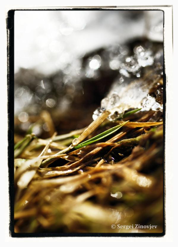 close-up  of spring grass