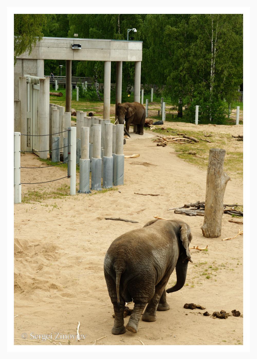elephants from Tallinn Zoo.