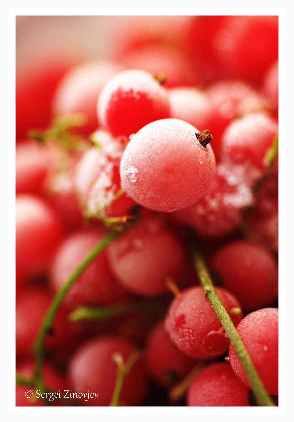 frozen red currants