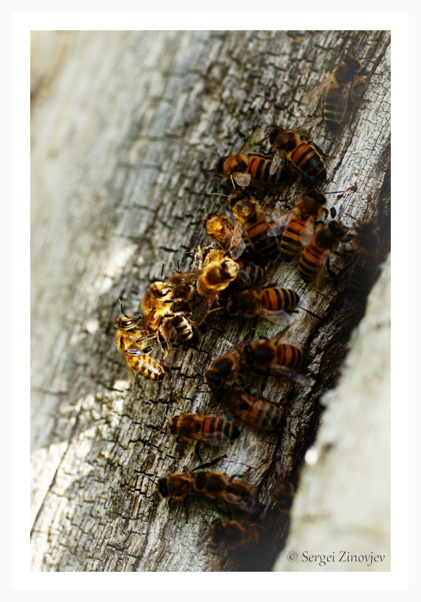 close-up of bees on the tree