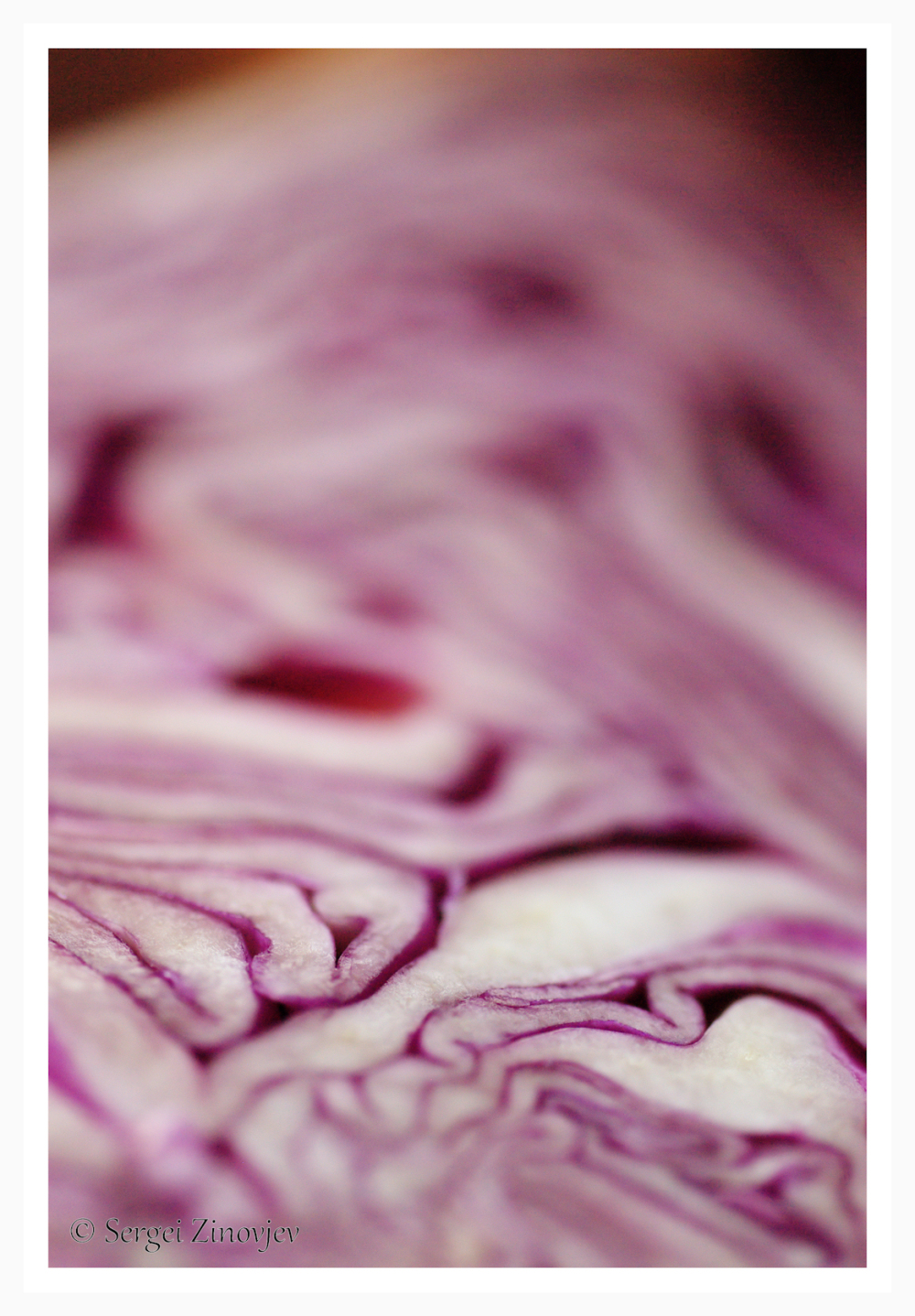 close-up of red cabbage