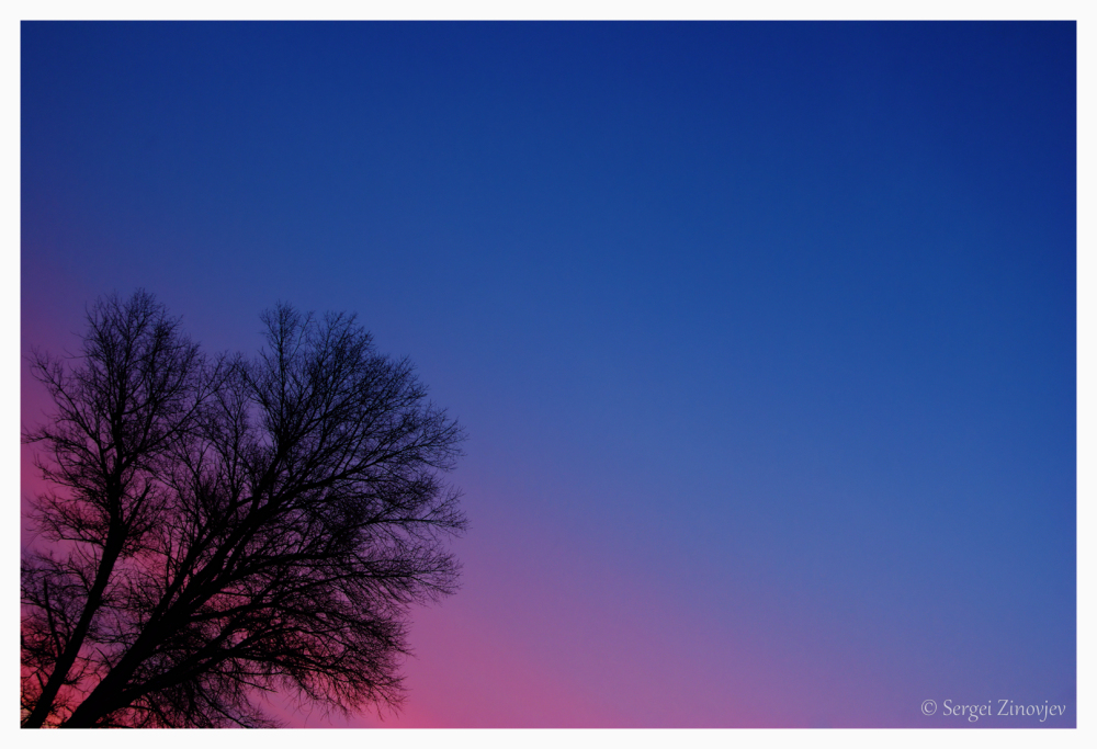 silhouette of tree on colorful sky