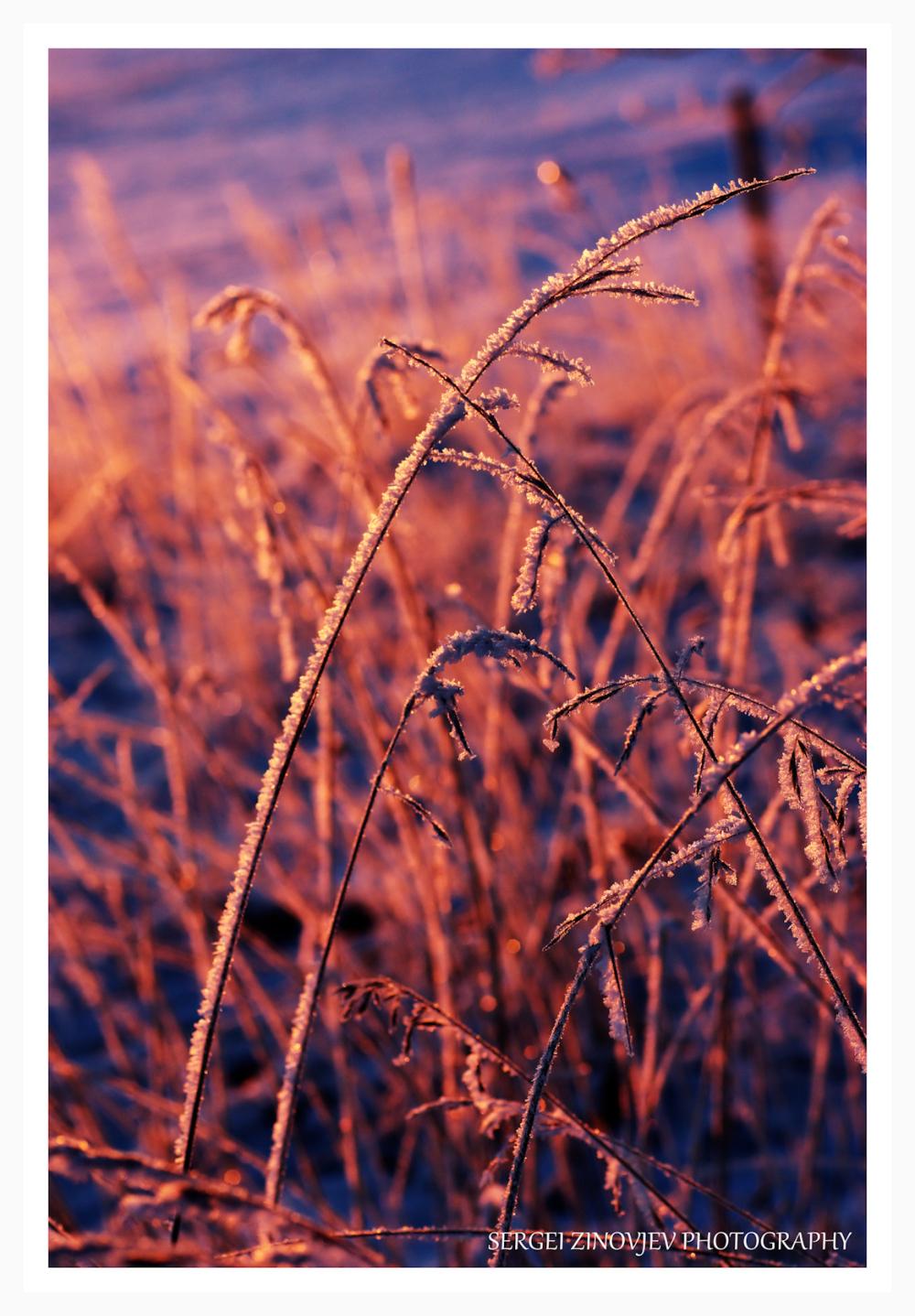 morning light at frozen grass