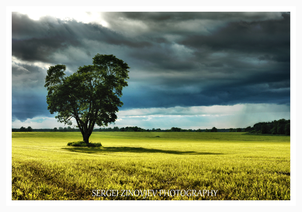 single tree on the field with cloudy sky