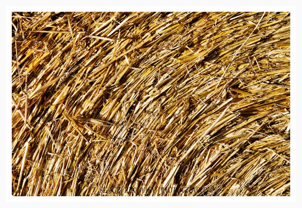 Close-up of hay
