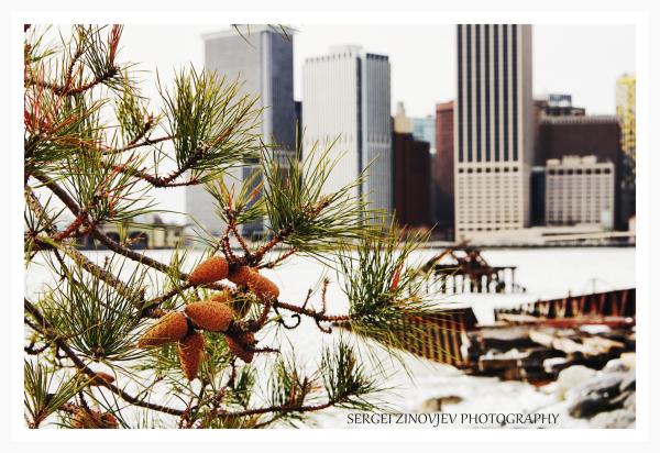 Winter Manhattan