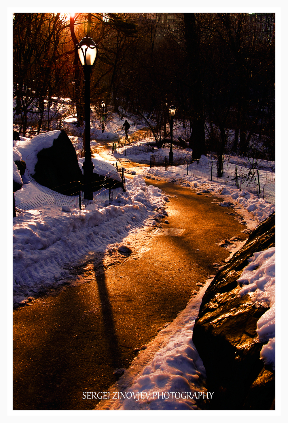 golden light in Central Park, NY