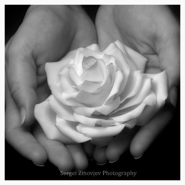 woman's hands holding sugar flower
