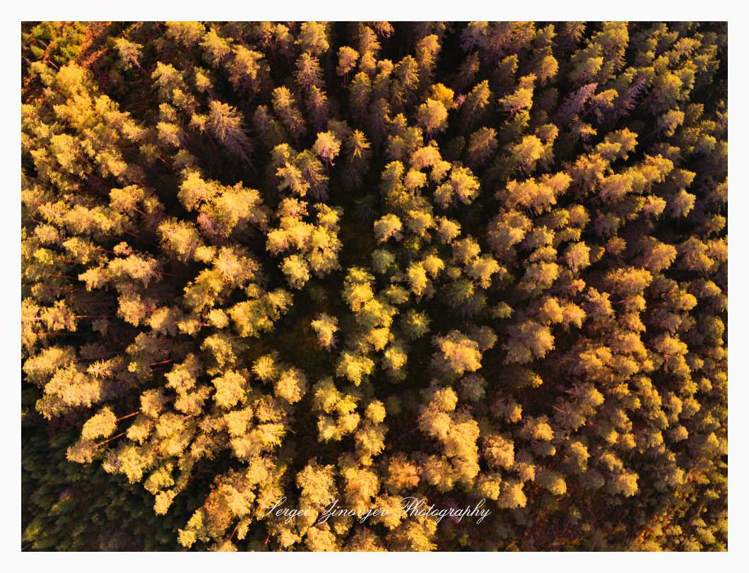 Forest trees from the high point of view