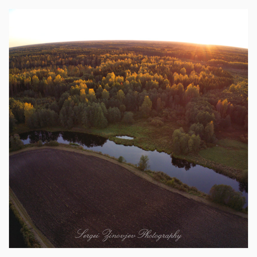Beautiful autumn in Estonian forest