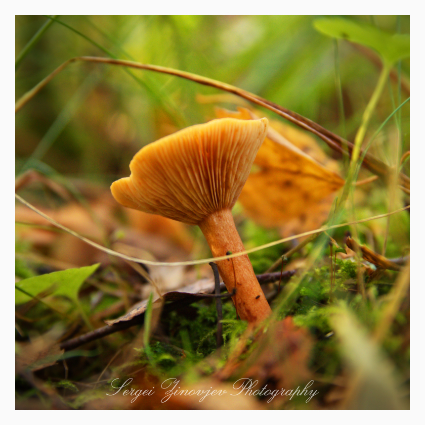 close-up of mushroom in the forest