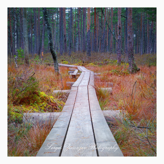 wooden road in the forest