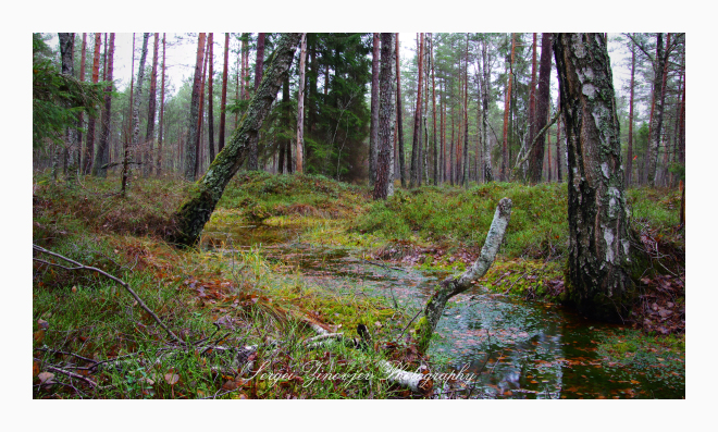 Wild forest located in Järvamaa, Estonia