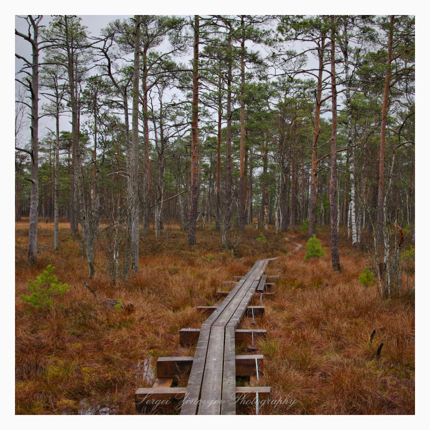 wooden path in th forest