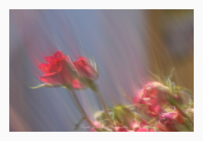 abstract image of roses