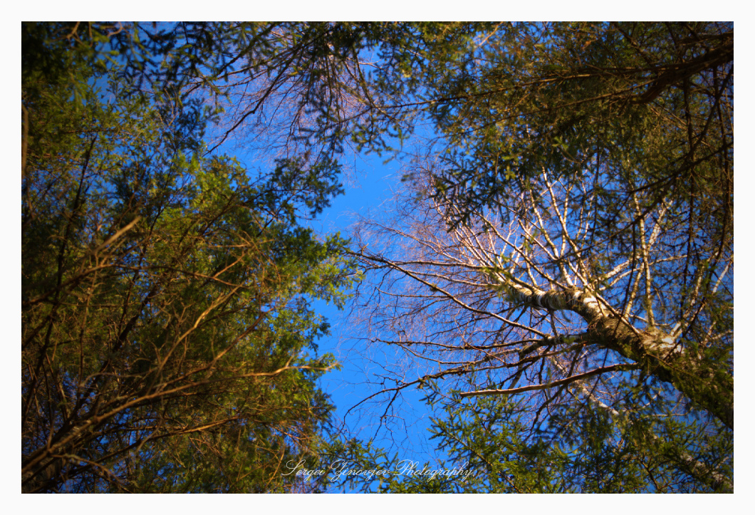 sky view through the trees