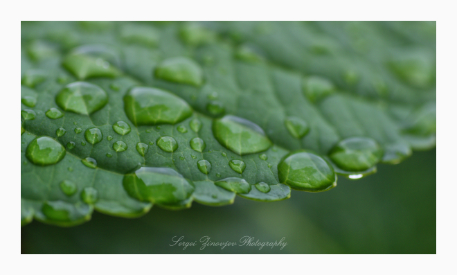 macro of water drops on leaf