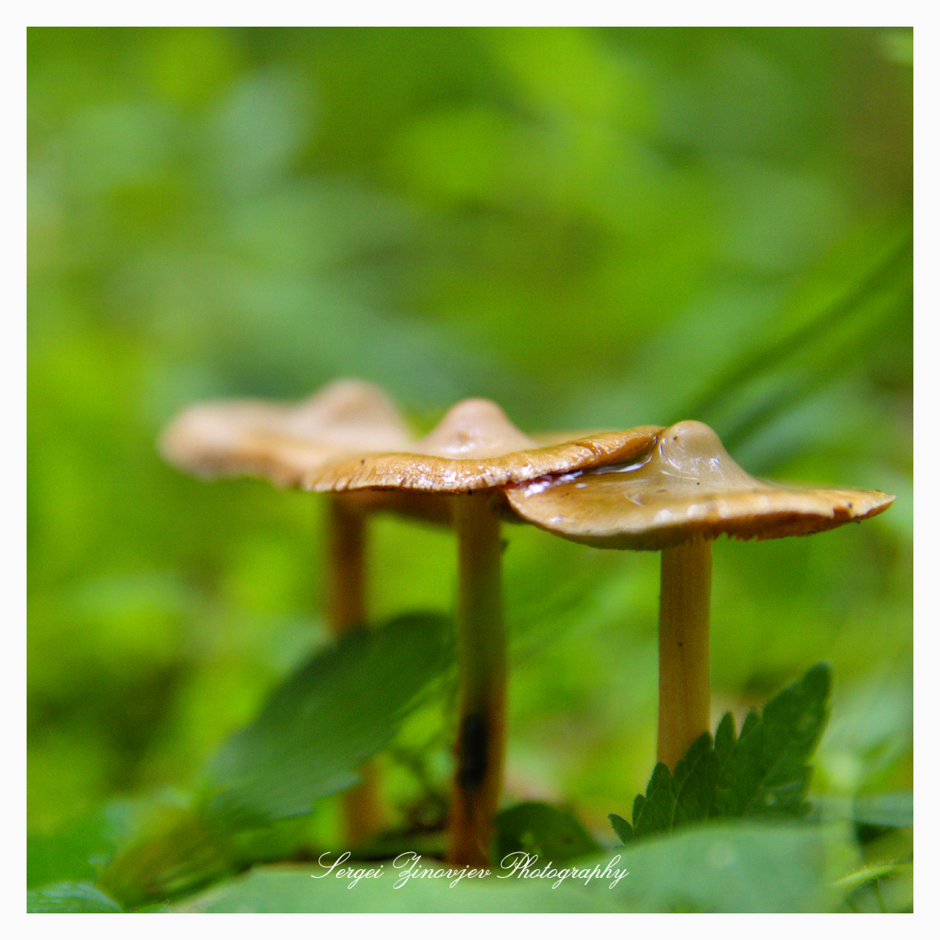 close-up of three mushrooms
