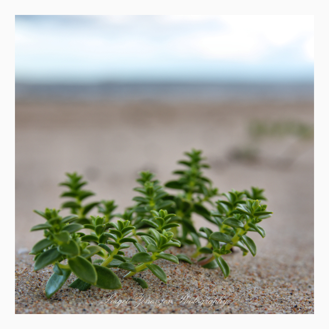 small plant on the sand