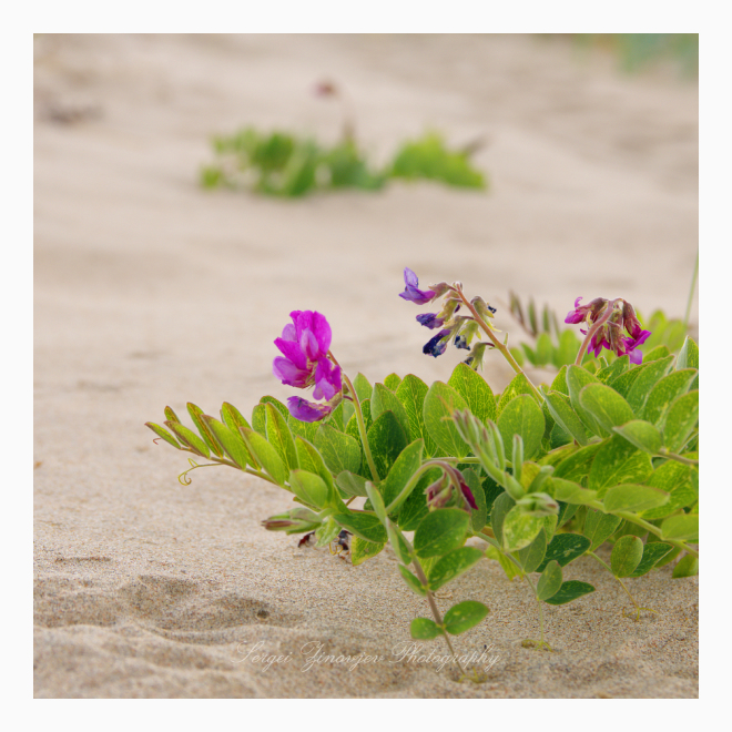 close-up of plants on the sand