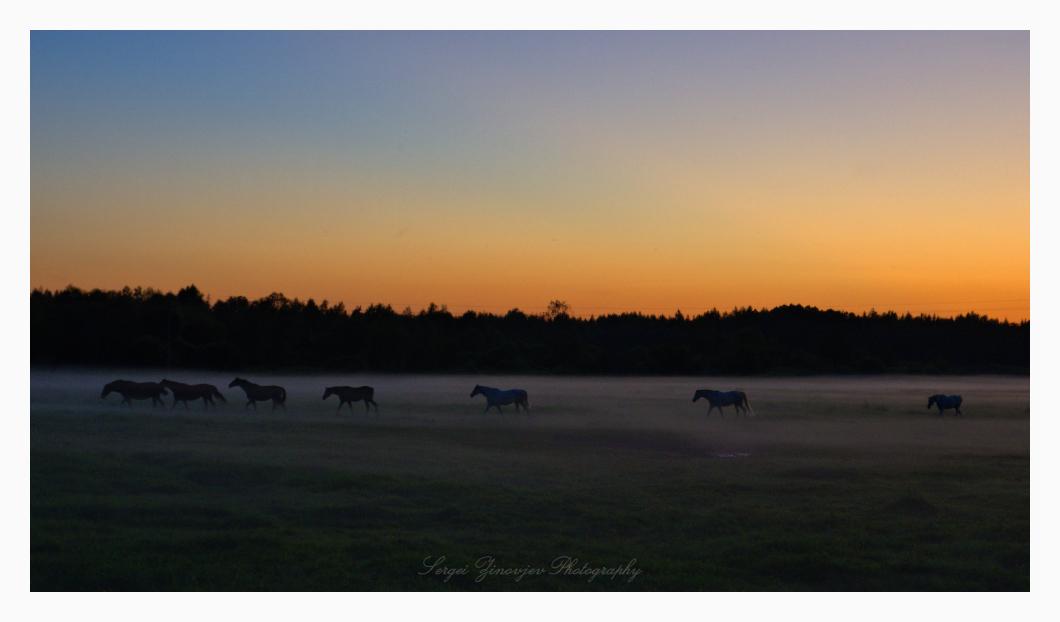 horses on the mist field