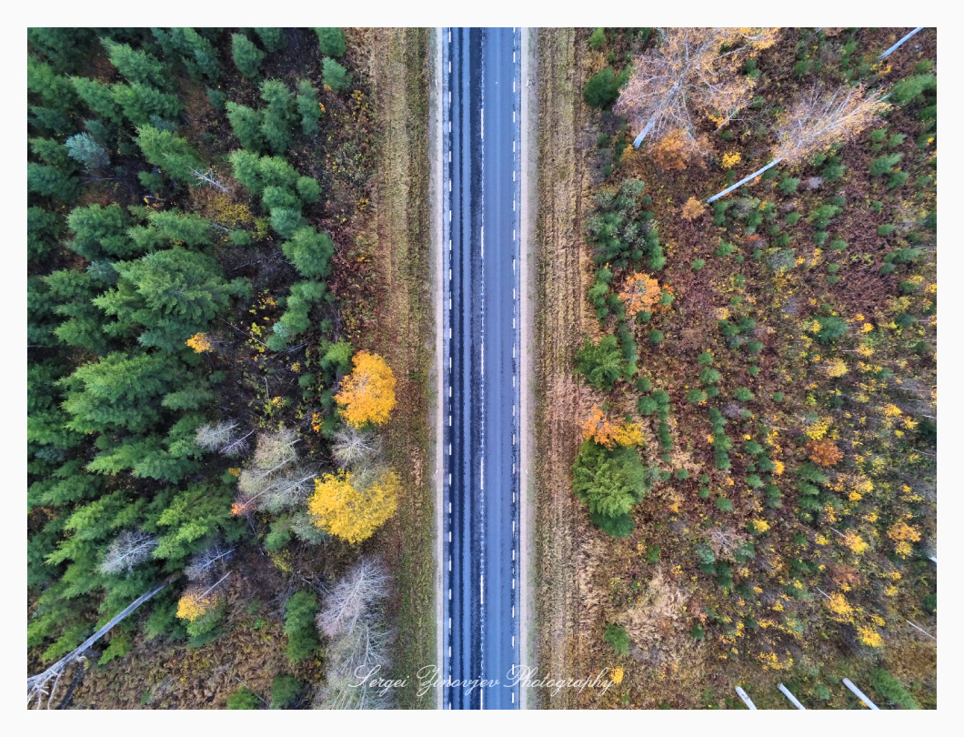 drone view of the road through the forest