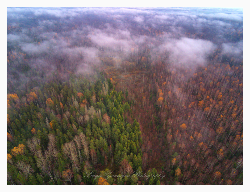 flying drone over Estonian forest