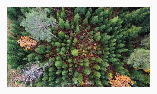 flighting drone over autumn forest