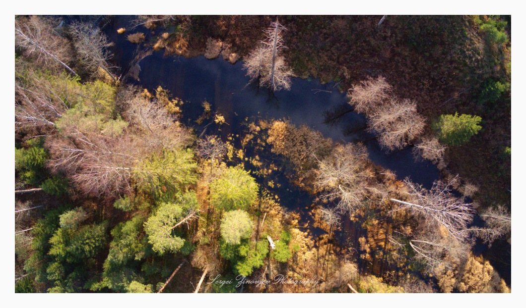 drone view of autumn forest