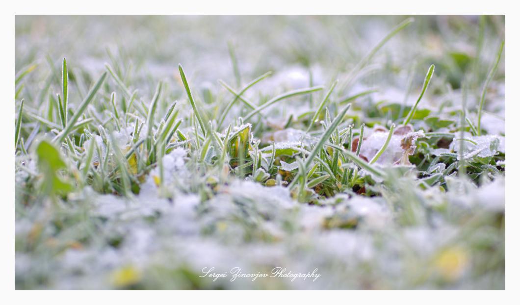 close-up of frozen grass