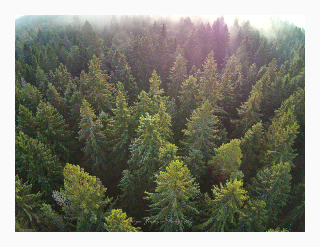 drone view of forest