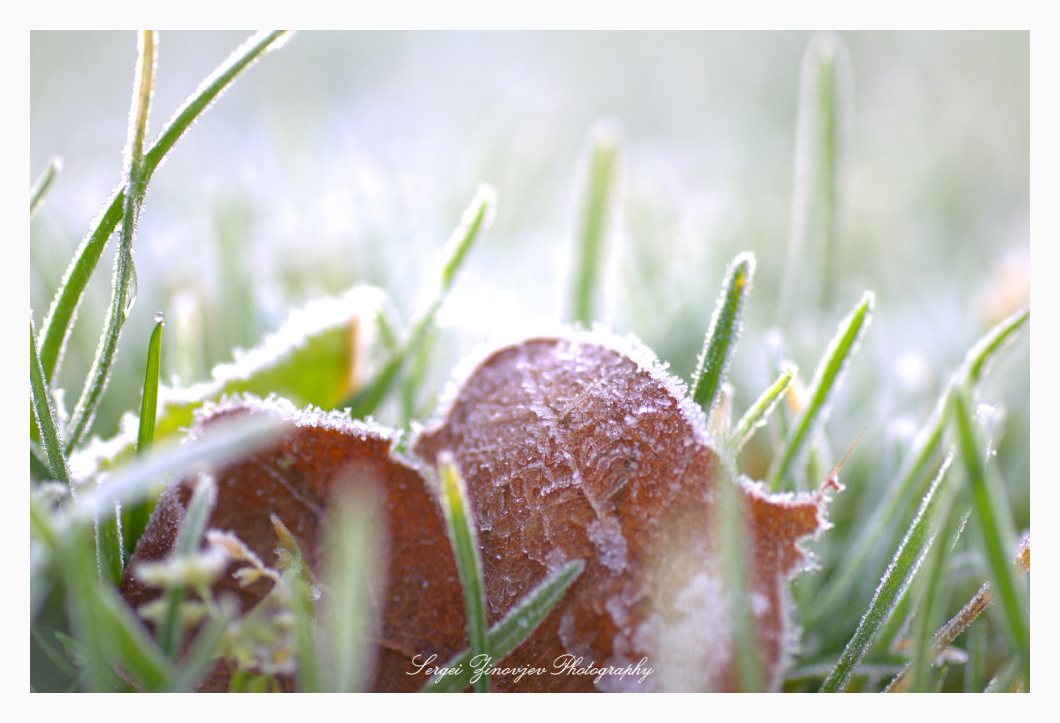 close-up of frozen grass