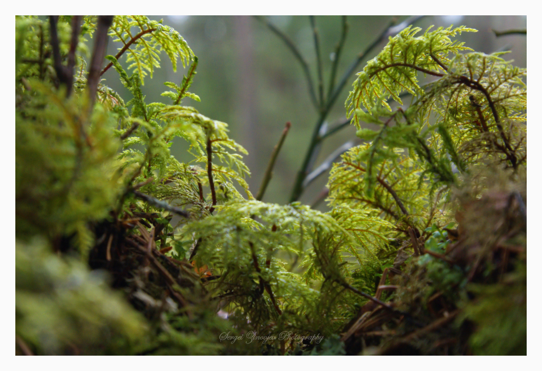 close-up of forest plants