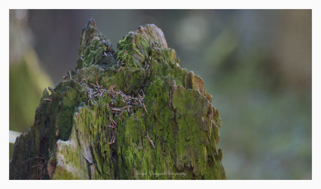 close-up of old stump