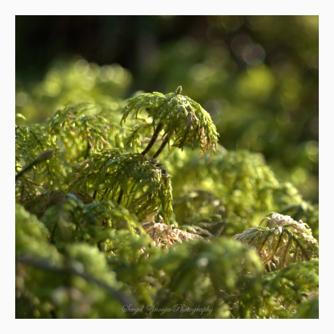 close-up of forest plant