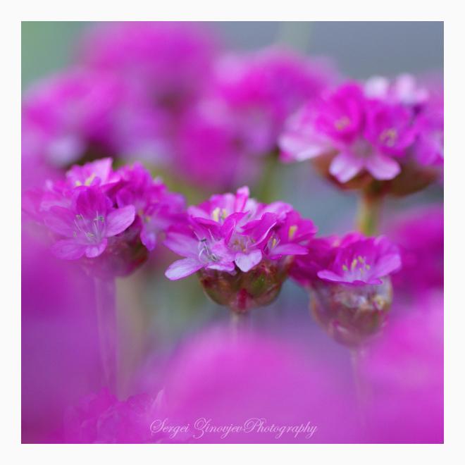 close-up of garden flowers