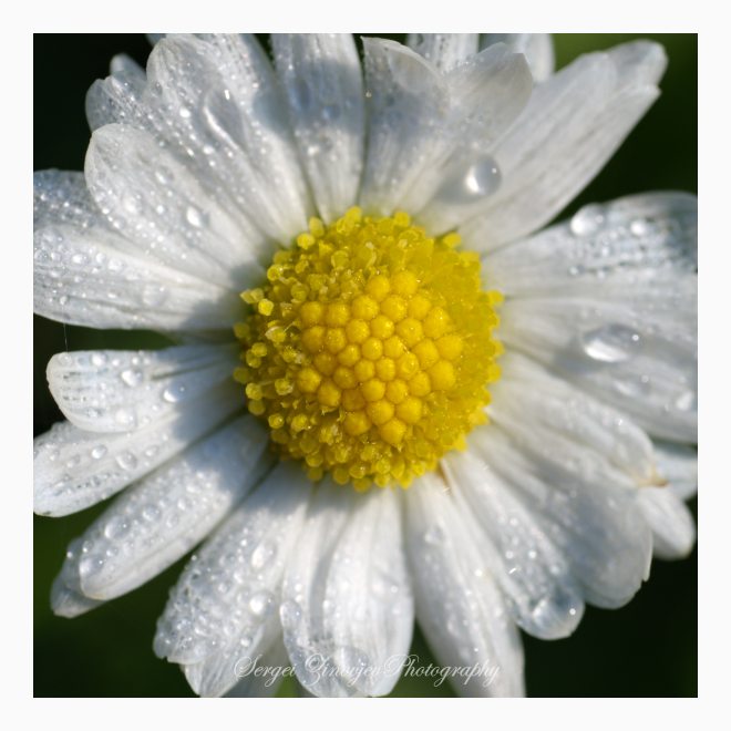 close-up of garden flower
