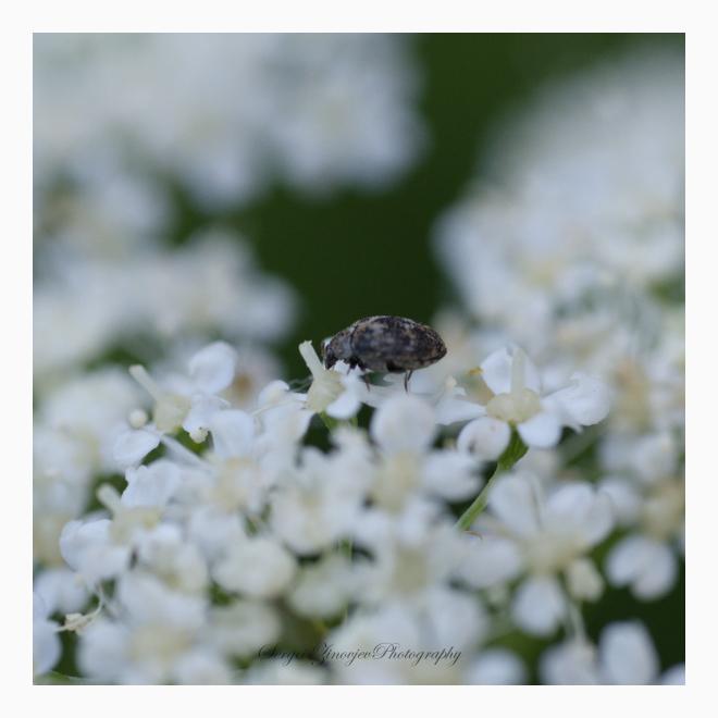 close-up of bug on flower
