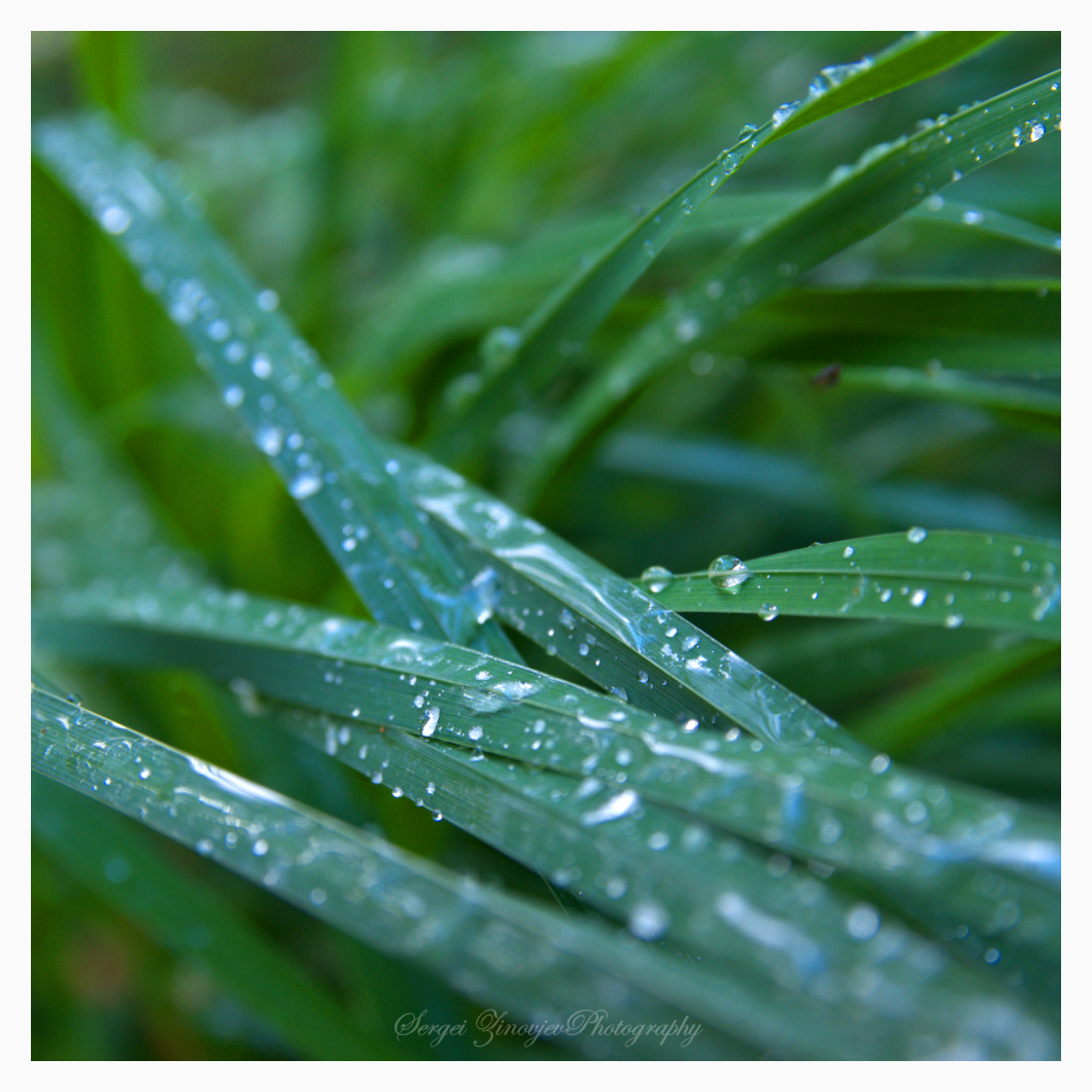 dops of water on the grass