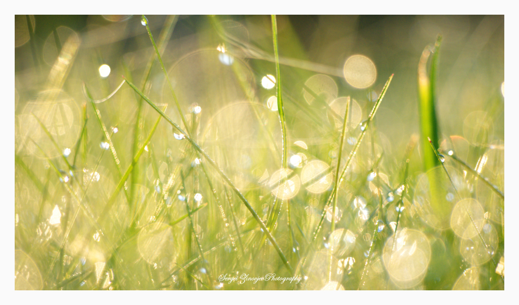 close-up of sunny light in the grass