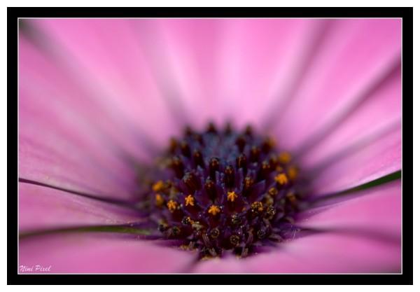 violet, orange, flower