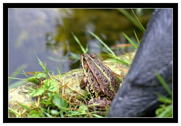 A pretty frog...