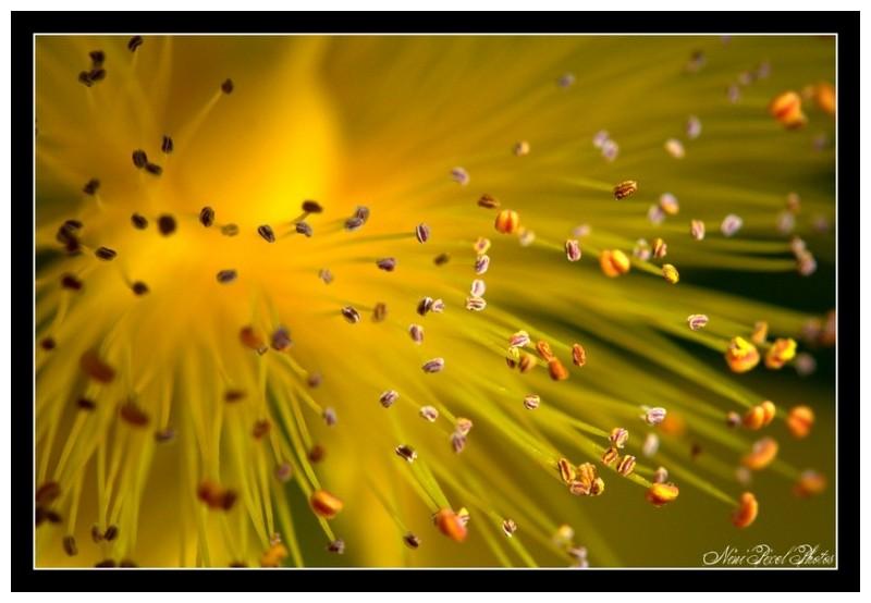 A floral fireworks