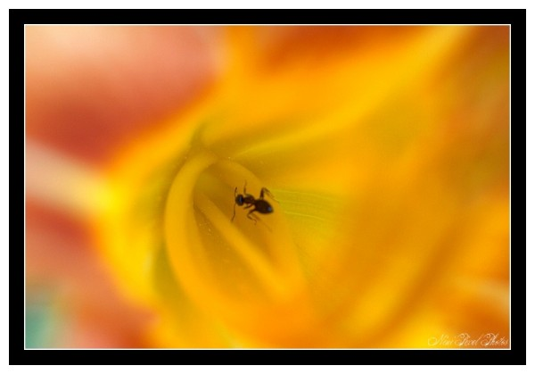 A small ant in a floral tunnel