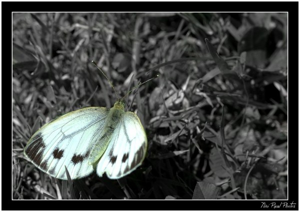 A butterfly...