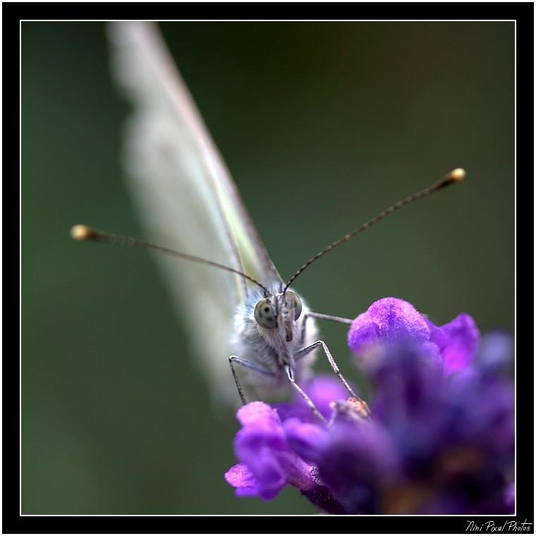 Butterfly...