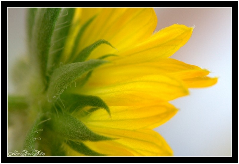 Little yellow flower...