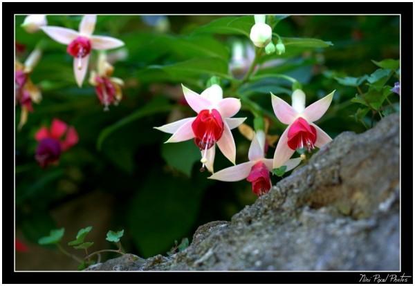 Fuchsia Pink & White...