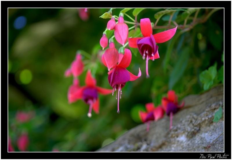 Small Bells...