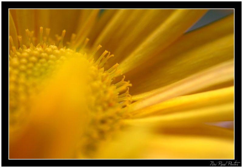 Small chrysanthemus...